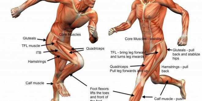 Какие мышцы задействованы и работают при различных техниках бега