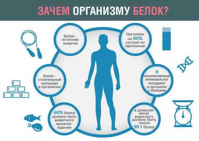 11 признаков нехватки белка в организме