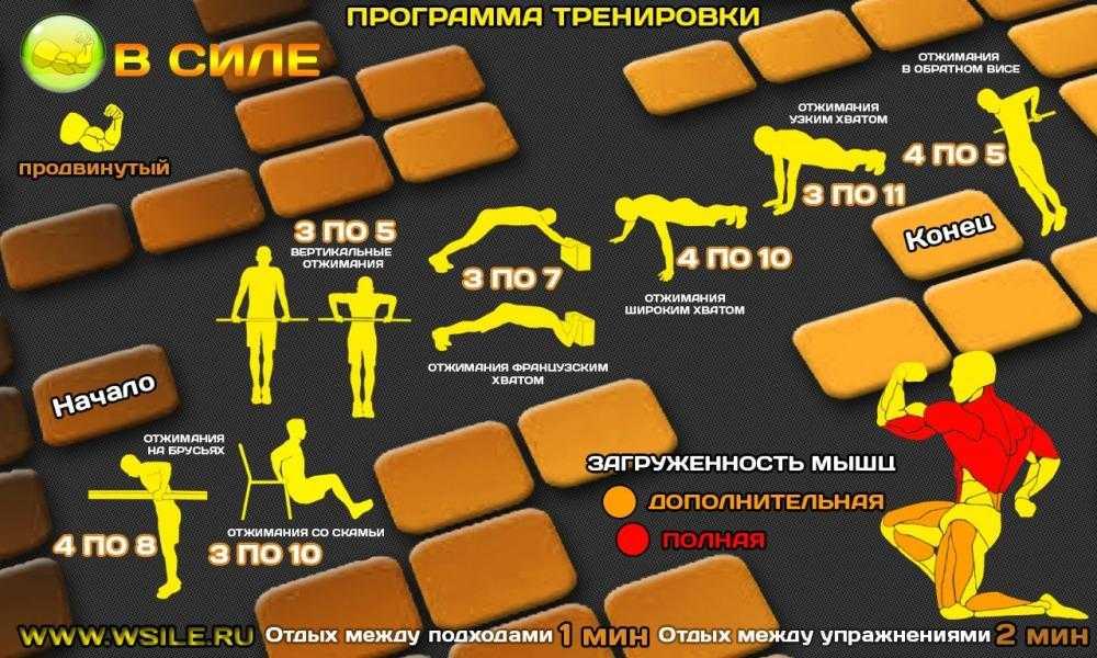 Силовая программа тренировок для мужчин: план на 3 занятия в неделю, базовые упражнения