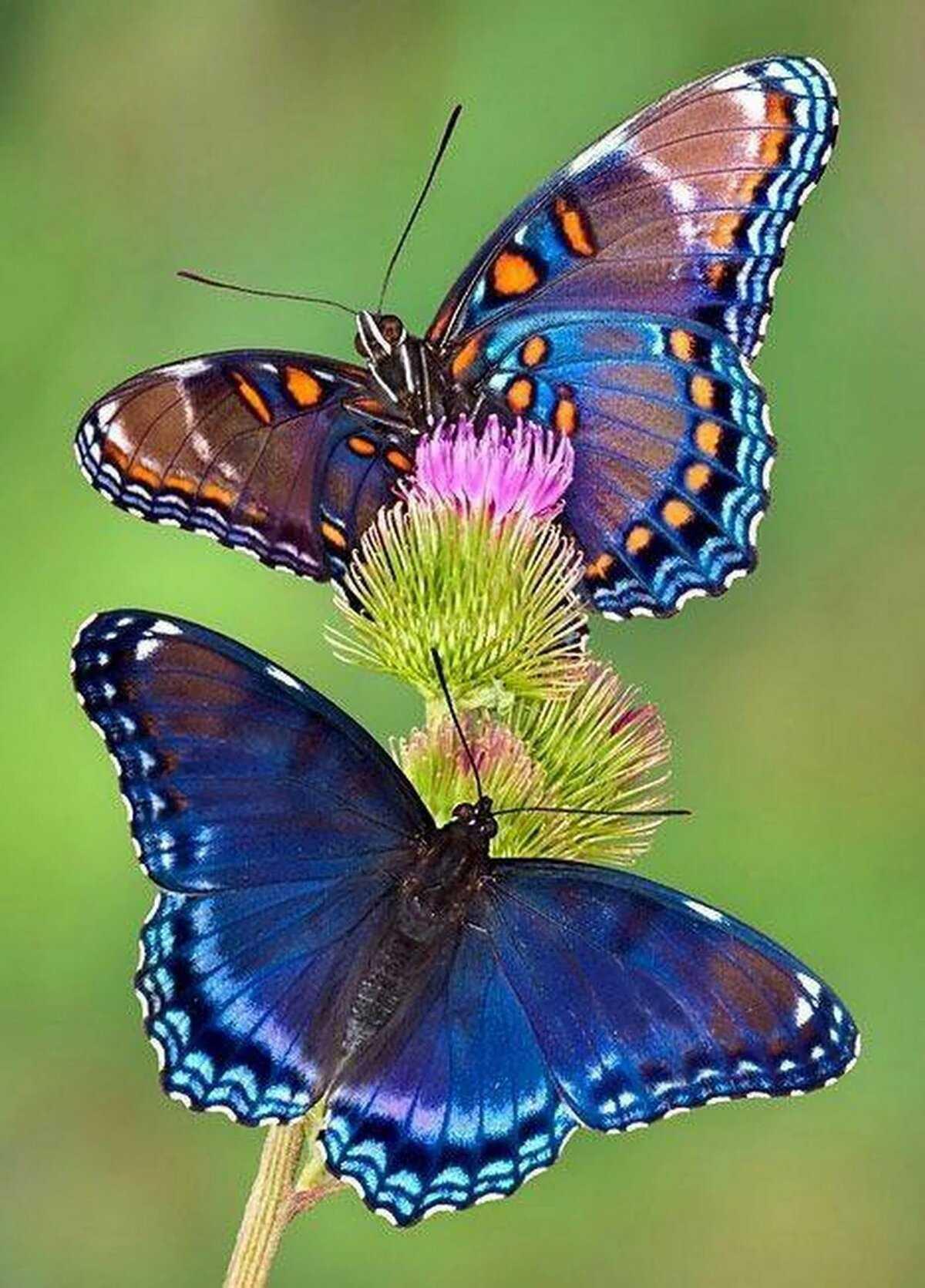 Польза упражнения бабочка