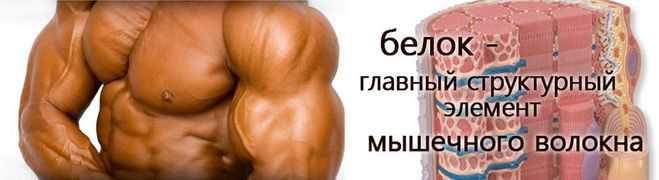 Чем полезны белки для организма, норма потребления