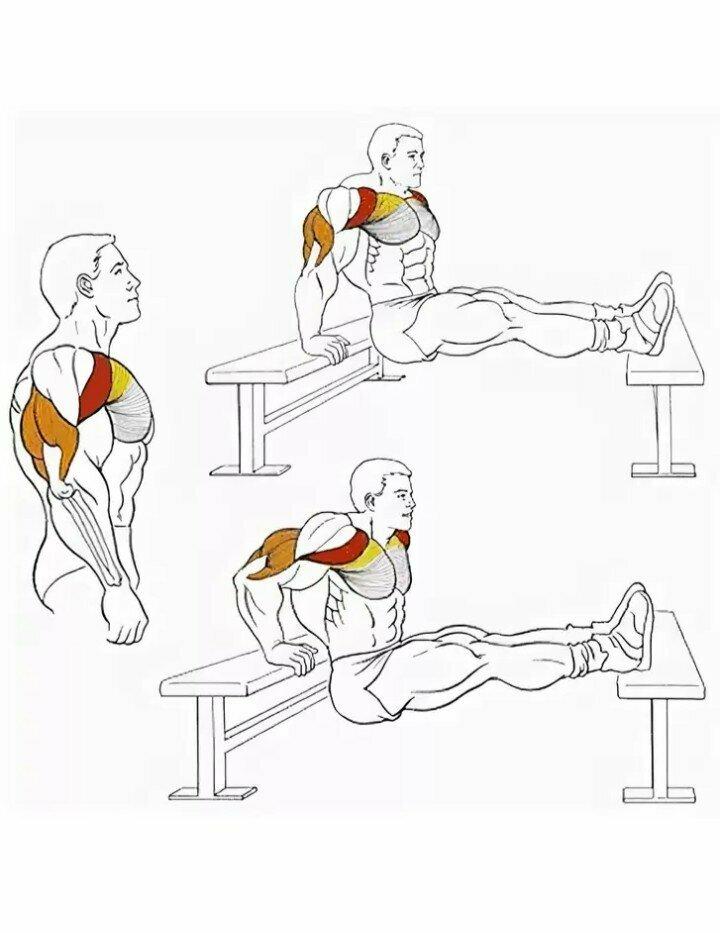Вспомогательные упражнения для жима лежа   lastmanstanding