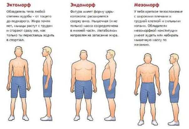 ?типы телосложения — сводная таблица видов. как определить свой?