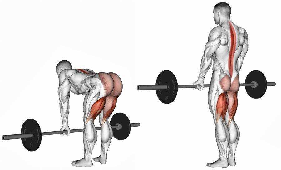 Становая тяга: составление программы тренировки по увеличению веса, развитию силы, массы