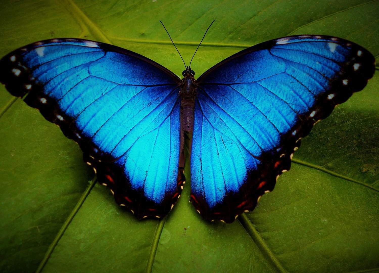 Упражнение бабочка: делаем грудь рельефной