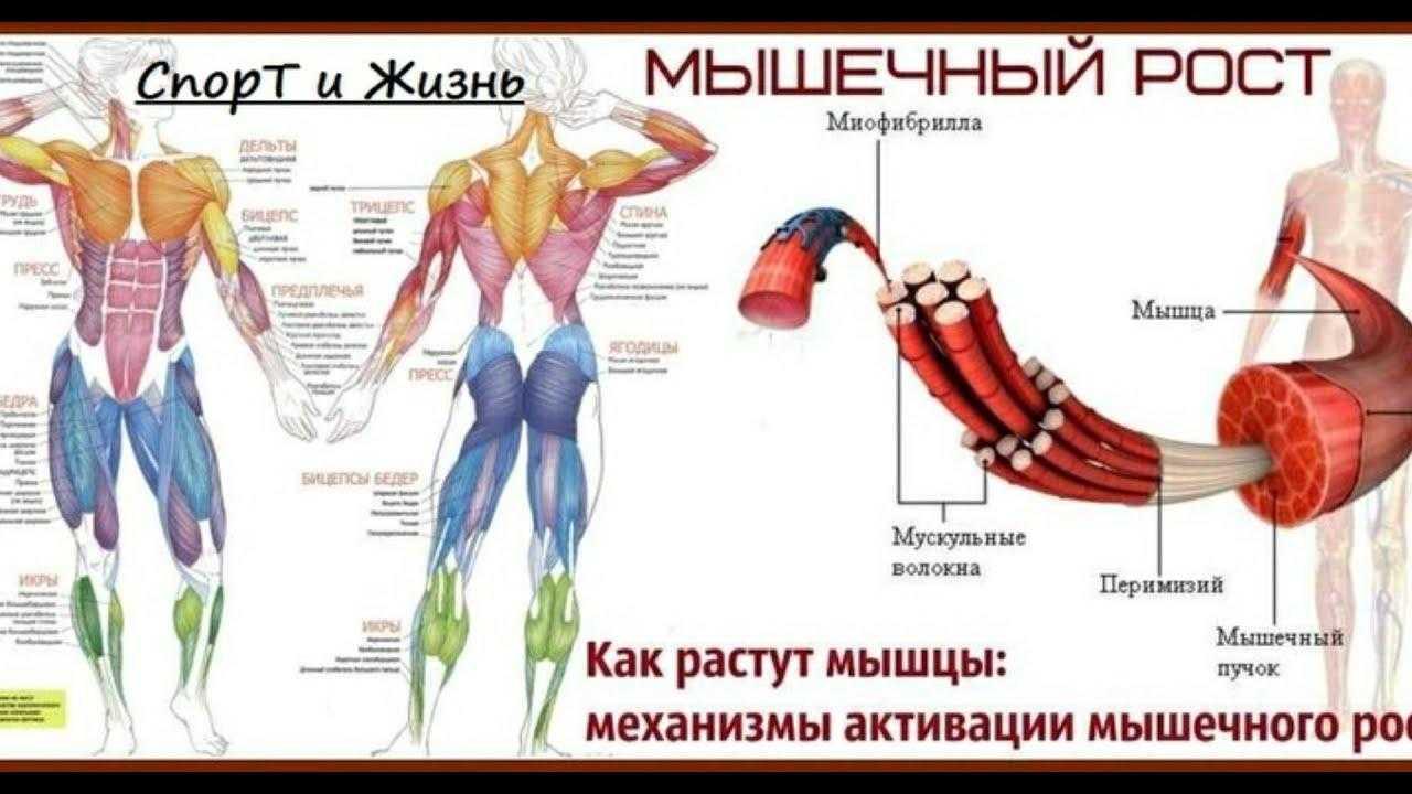 Боль в ногах после тренировки