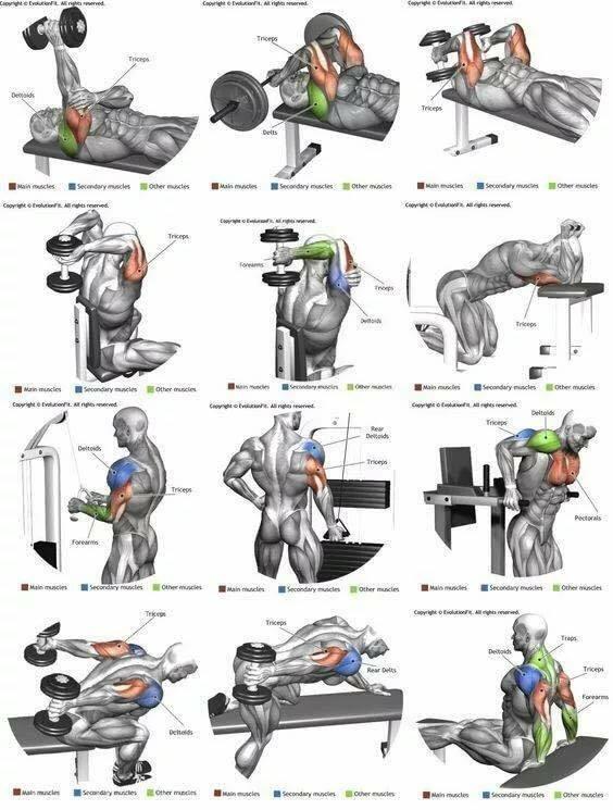 Эффективные упражнения на ноги в тренажёрном зале | rulebody.ru — правила тела