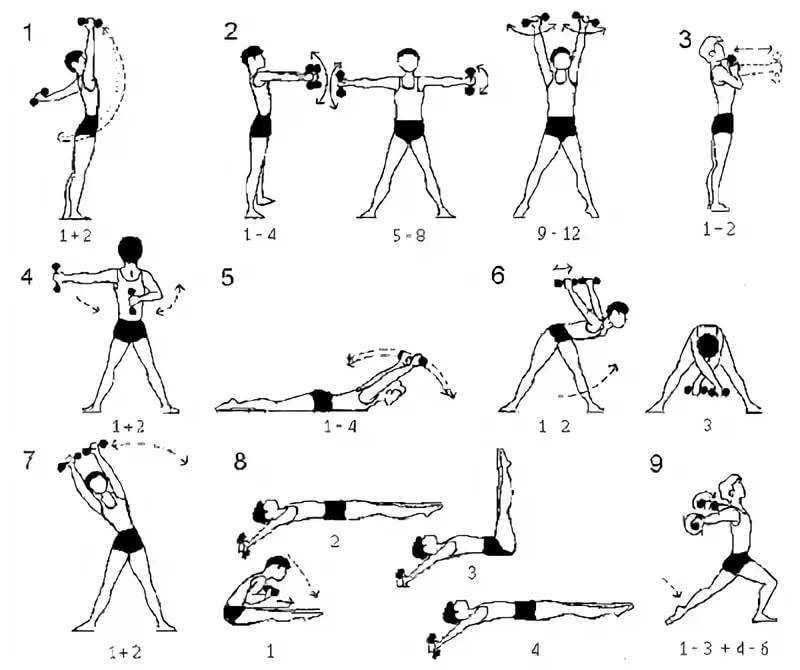 Как накачать предплечья с помощью обычных гантелей и штанги Примеры упражнений, техника выполнения, особенности тренировки и рекомендации