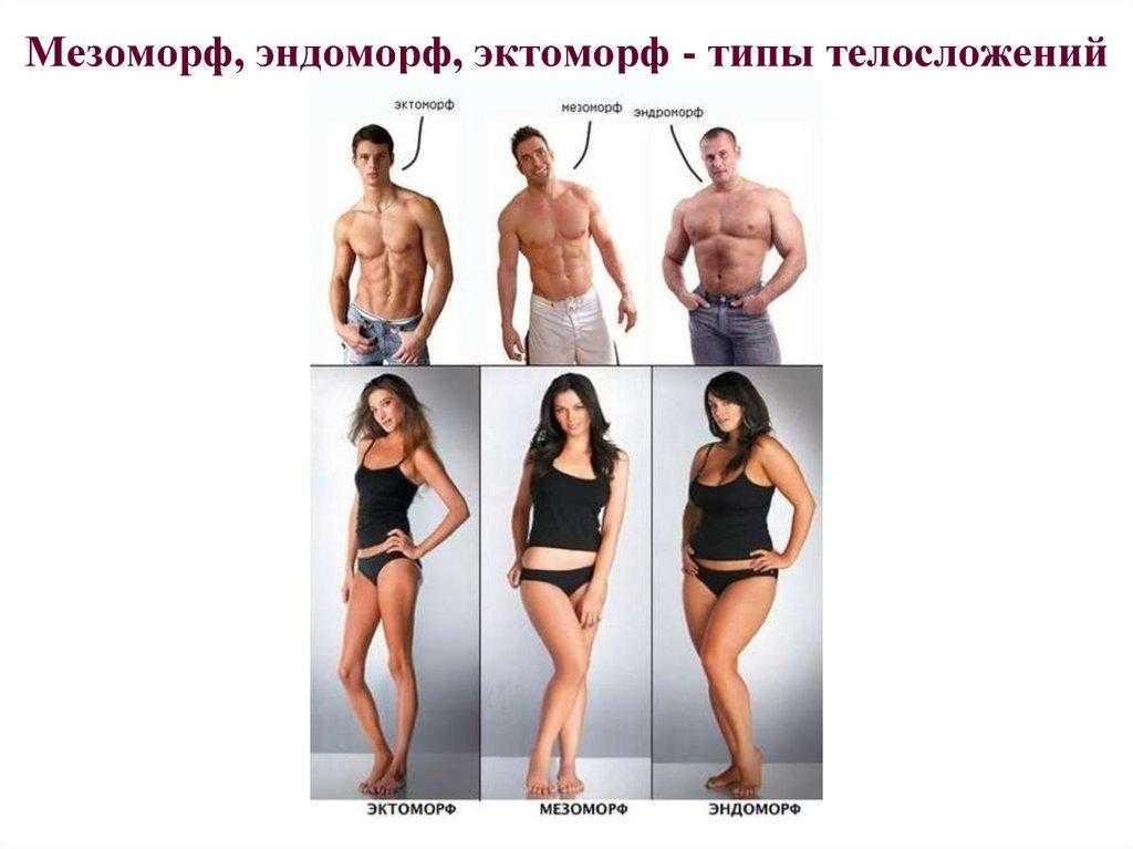 Эктоморф, мезоморф, эндоморф как определить тип телосложения, стратегии тренировок