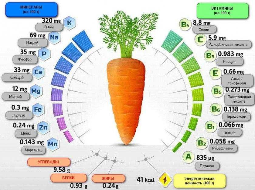 Вареная морковь: польза и вред для организма, калорийность
