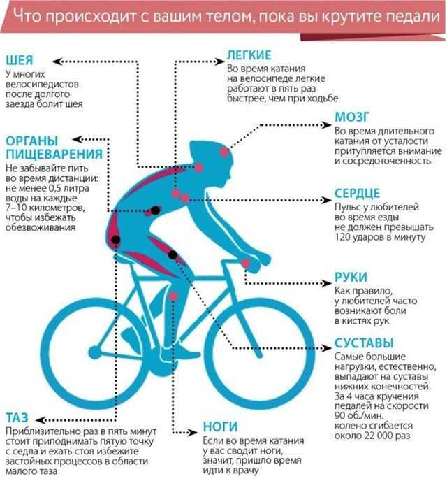 Полезна ли езда на велосипеде для похудения? | советы | veloprofy.com