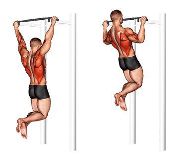Подтягивания широким хватом за голову — специфическое упражнение для развития мышц спины Разбираем технику выполнения, противопоказания и важные нюансы