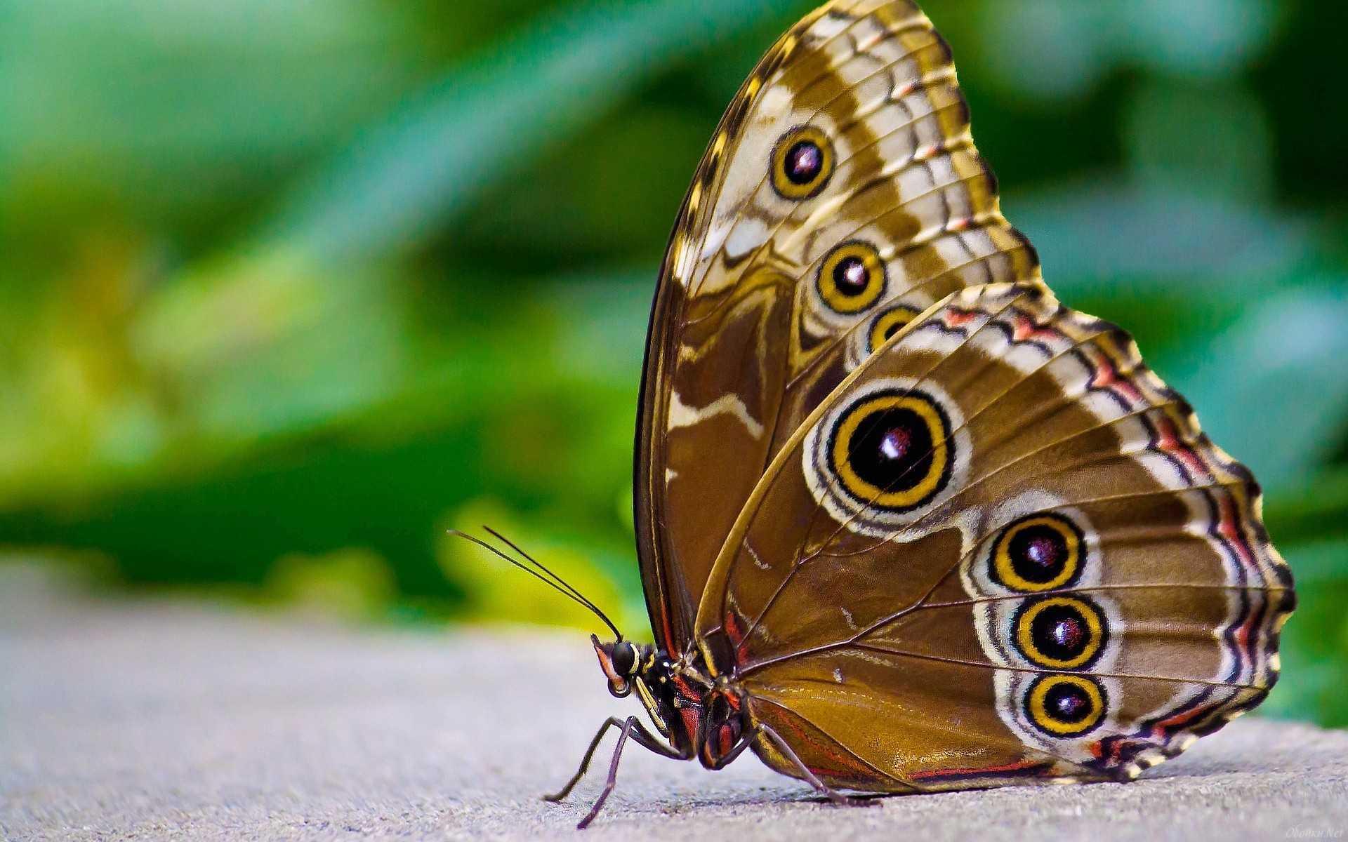 Упражнение для ног бабочка