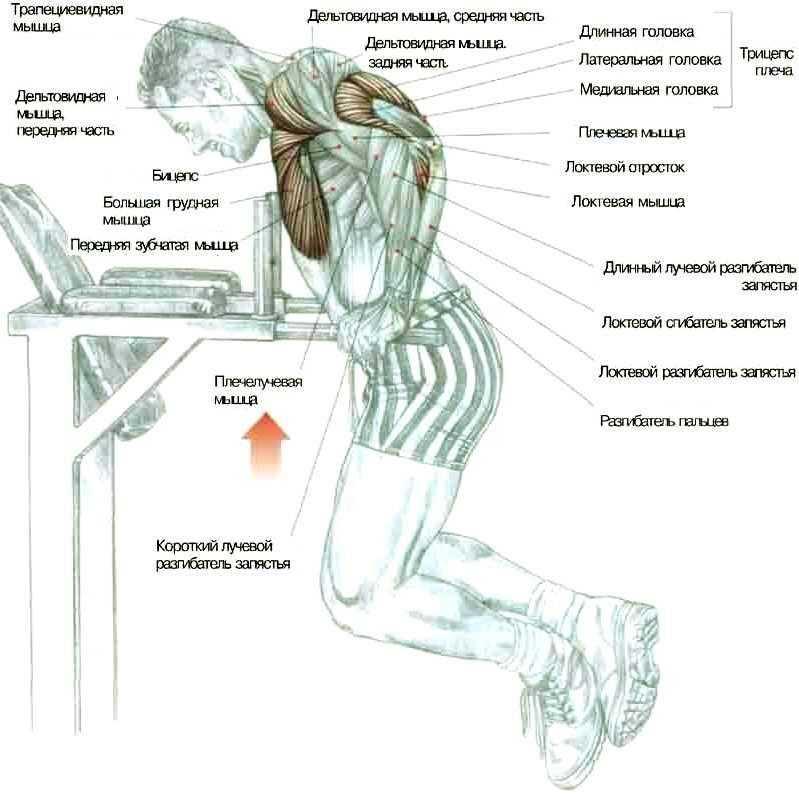 Можно ли делать отжимания каждый день, это полезно или вредно для вашей мускулатуры Сколько раз нужно отжиматься и какие схемы тренировок могут быть