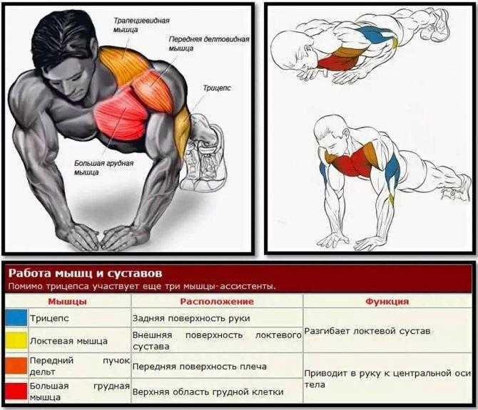 Программа на массу суперсетами для грудных и спинных мышц