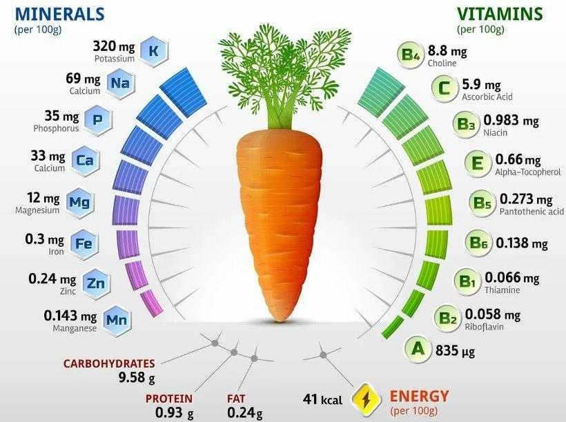 Полезные свойства моркови: омолаживает, тонизирует и поддерживает организм в тонусе Узнайте о полезных свойствах моркови в нашем интернет-журнале