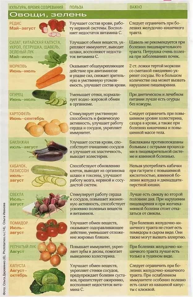 Морковь - польза и вред для здоровья