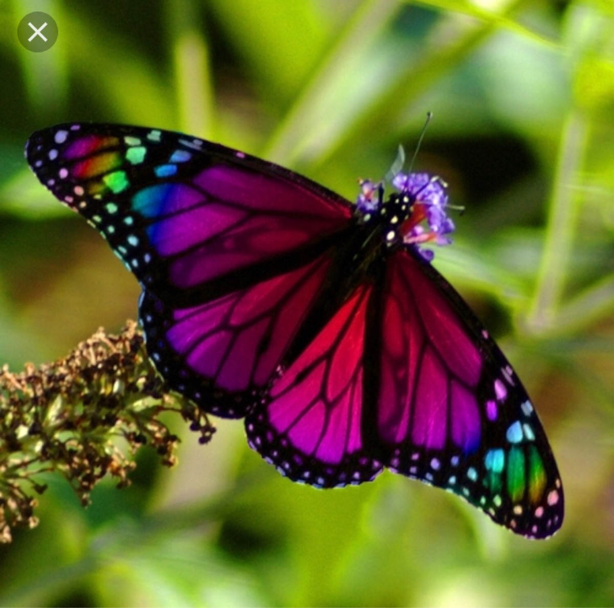 Упражнение бабочка для растяжки