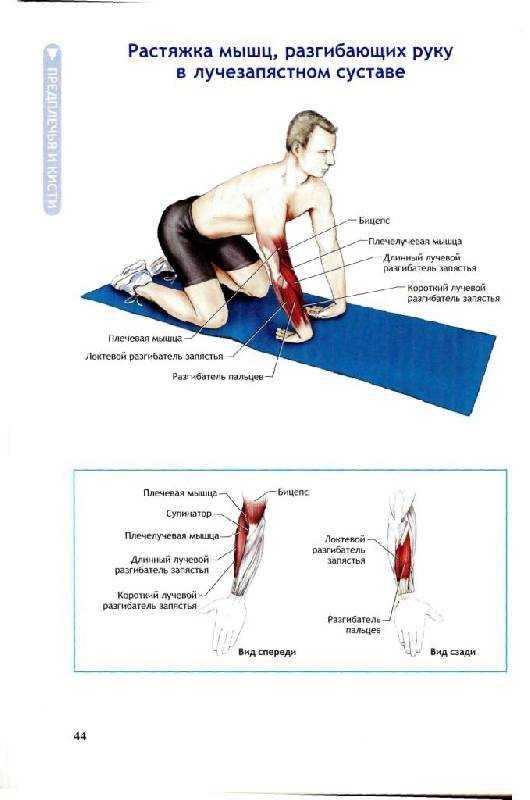 Как правильно составить комплекс упражнений для растяжки после тренировки - лайфхакер