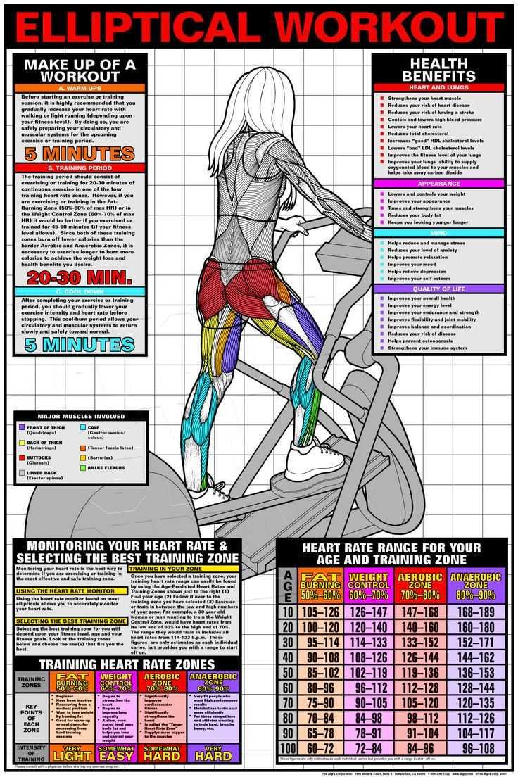 Занятия на эллипсоиде для похудения: как правильно заниматься на тренажере, эффективность кардио тренировок и польза упражнений