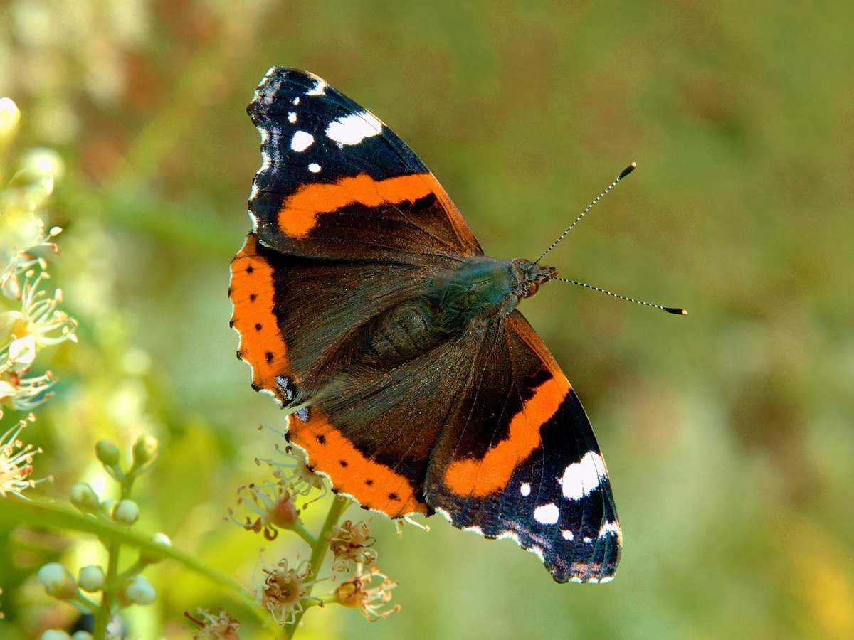 Развиваем грудь с упражнением «бабочка» – все боевые искусства и единоборства