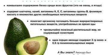 Авокадо: польза и вред для организма, виды и особенности, чем полезно для женщин