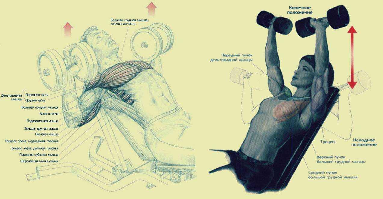 Базовые упражнения – что это такое и какая от них польза?