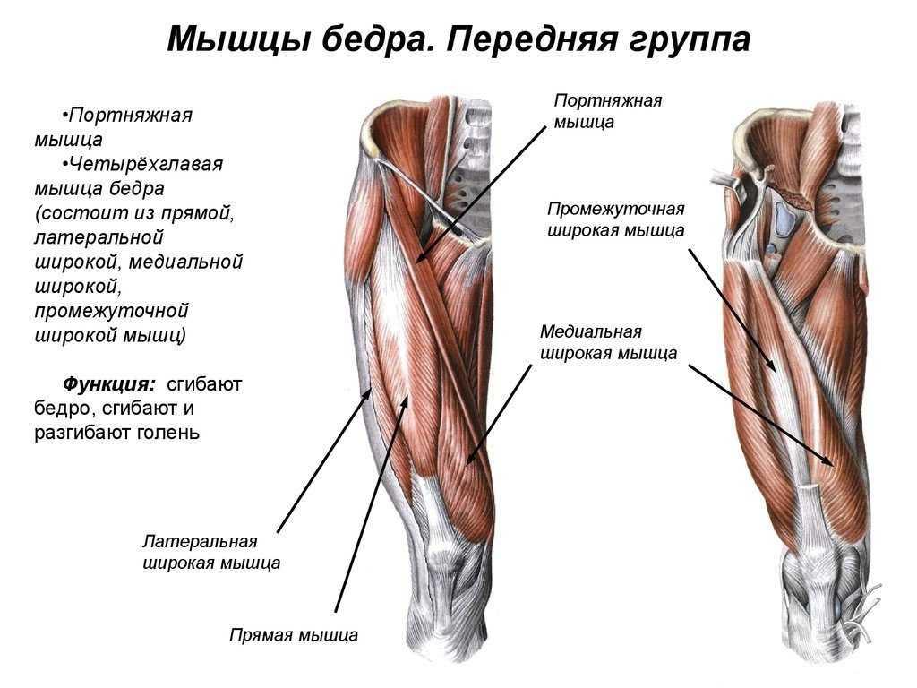 Разгибание ног в тренажере – лучшая техника выполнения упражнений в сидячем положении.  все тонкости, секреты + инструкция для вас!
