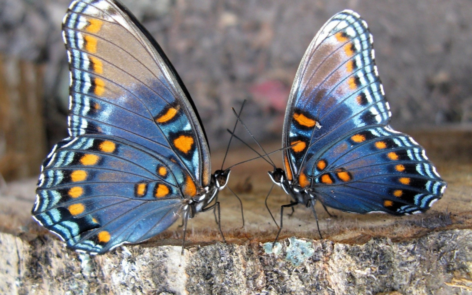 Упражнение бабочка для ног пришло из йоги Его регулярное выполнение не только улучшает растяжку, но и нормализует кровообращение в органах малого таза