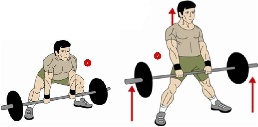Упражнение приседание: техника выполнения