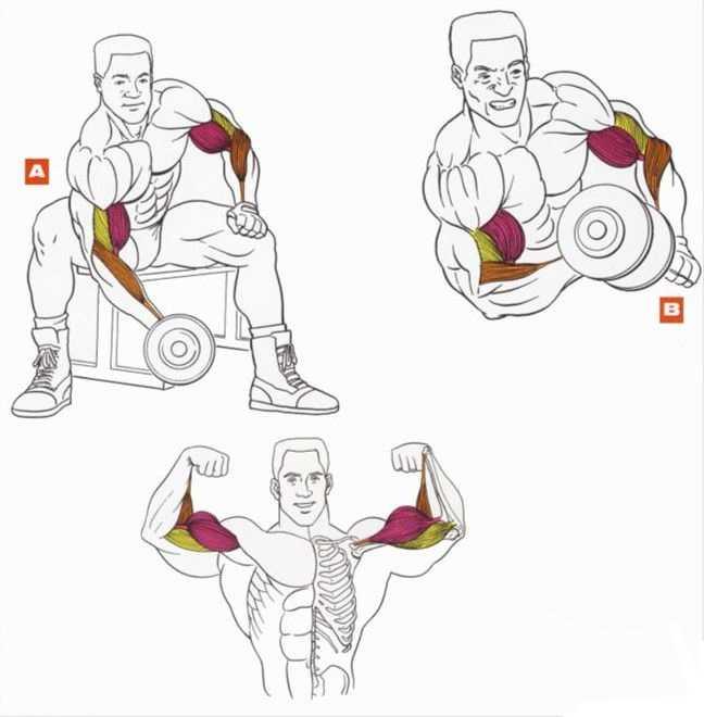 10 лучших упражнений на бицепс во все времена