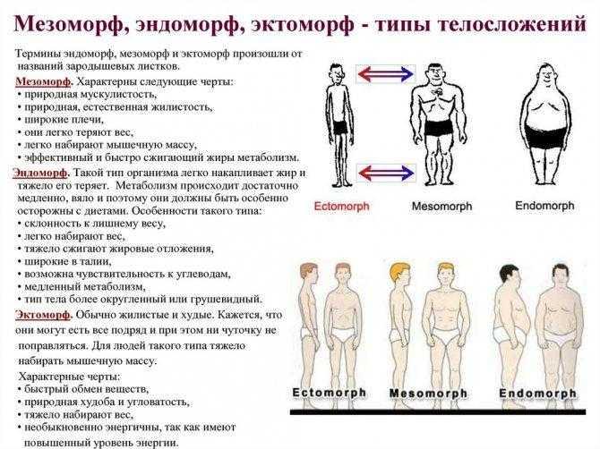 ? эктоморф, мезоморф или эндоморф — как определить свой тип телосложения?
