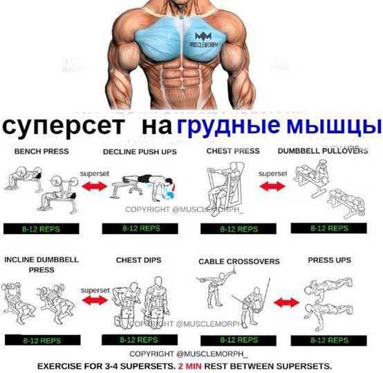 Программа тренировок на бицепс в зале и домашних условиях