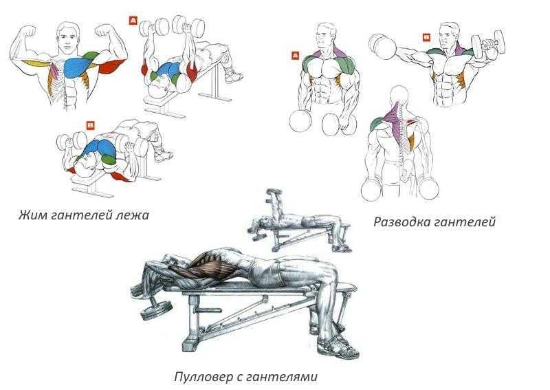 Подъём гантелей перед собой: техника выполнения и варианты упражнения   rulebody.ru — правила тела