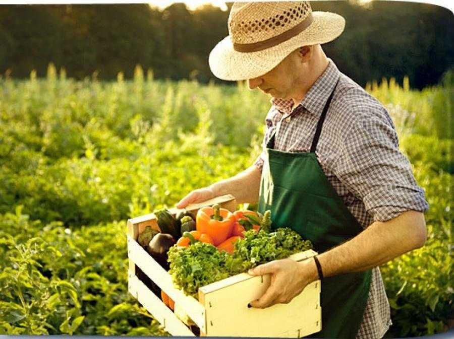 Сельскохозяйственное сырье