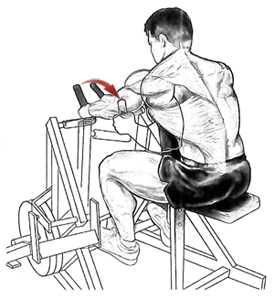 Упражнения для спины в тренажерном зале и в домашних условиях