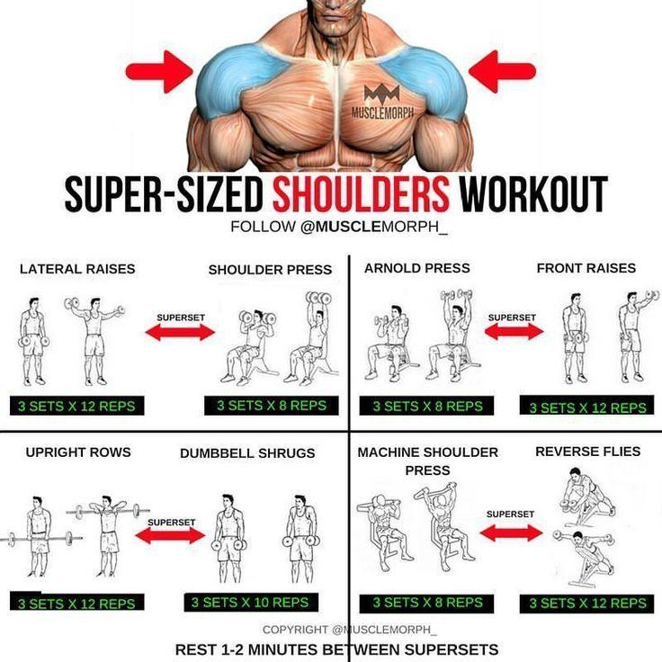 Упражнения и мышцы. тренажёрный зал.