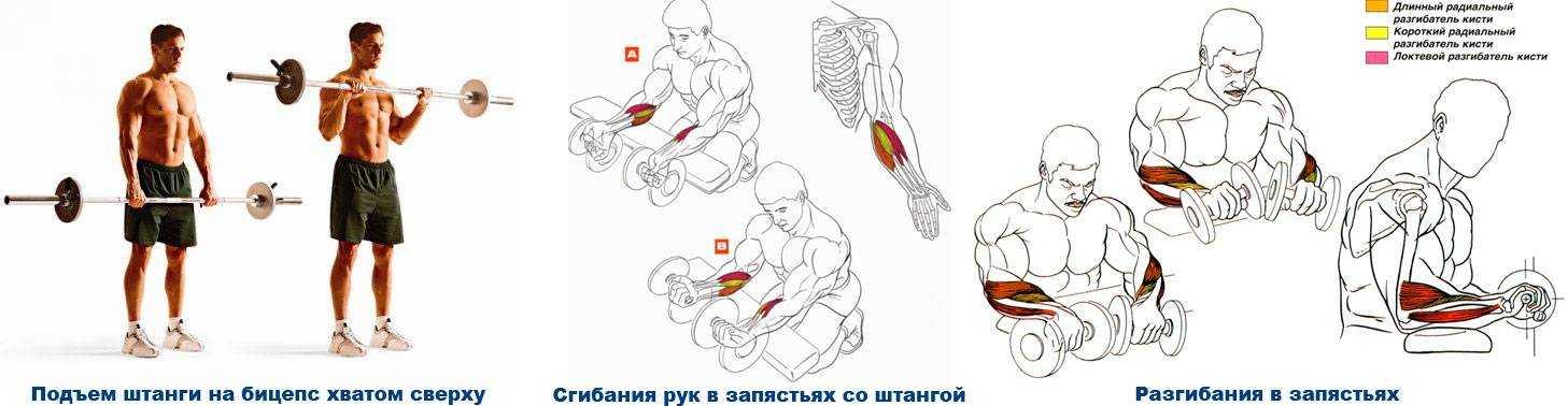 Сила хвата: способы развития и тренировки
