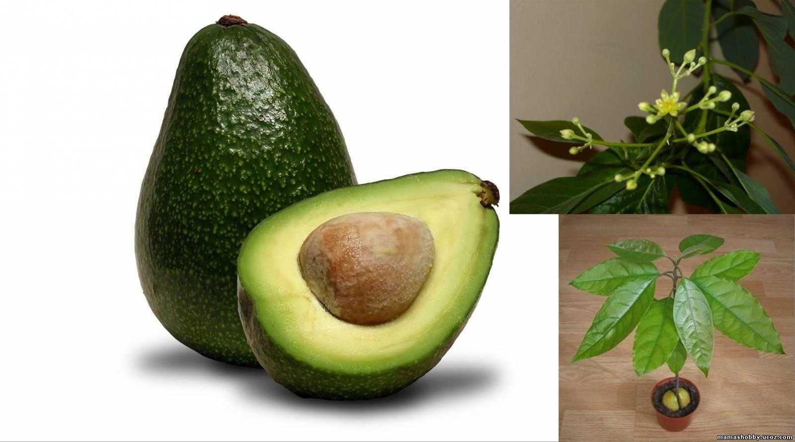 Бутерброды с авокадо ? (5 простых рецептов) - домашний авокадо