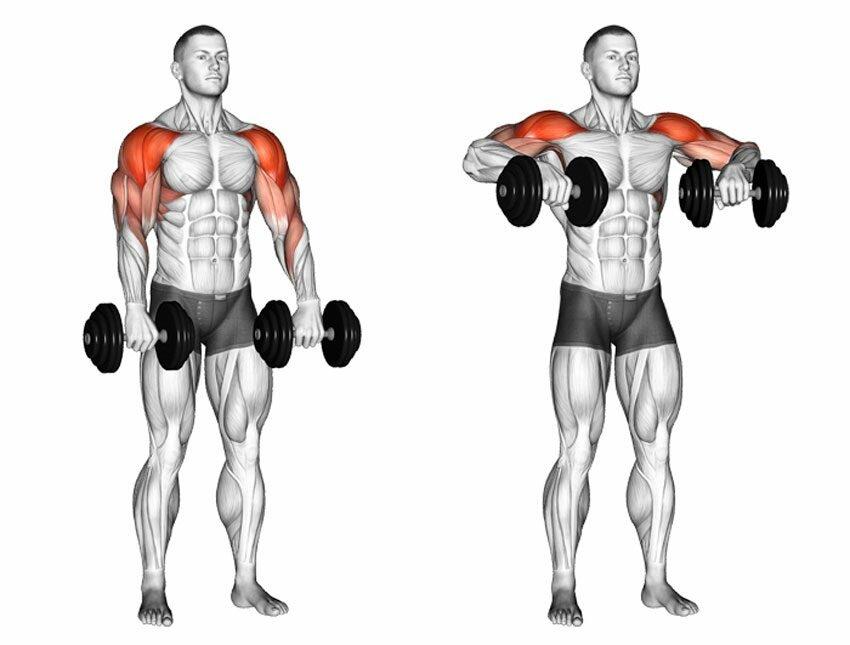 Предлагаем вам топ-12 упражнений на бицепс с гантелями и штангой с гифками как для домашних условий, так и для спортзала Накачайте ваши руки эффективно