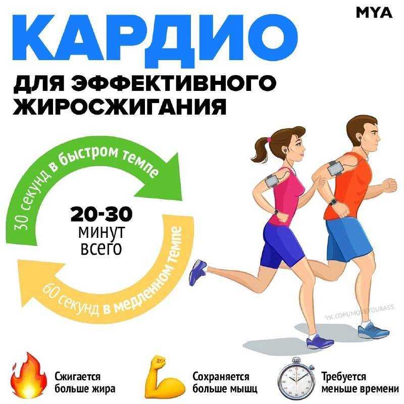 Кардио тренировки для сжигания жира: что это такое, правильные кардиотренировки, зоны жиросжигания, какие тренажеры сжигают больше