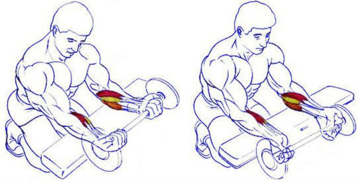 Сгибание кистей со штангой, а также их разгибание выполняются для развития мышц предплечий и тренировки силы хвата Вариации упражнений, правильная техника