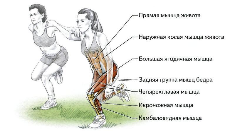 Какие мышцы тела при беге работают больше всего