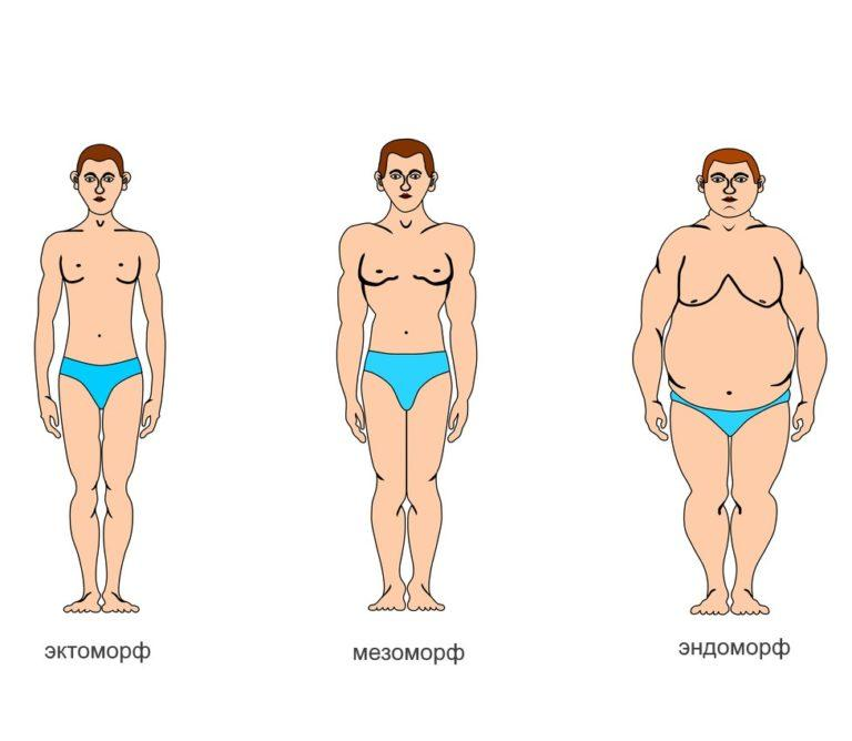 Как узнать какое у тебя телосложение: как определить кто ты эктоморф мезоморф эндоморф?