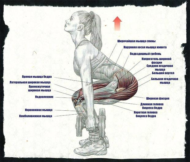 Как делать приседания со штангой на плечах? — sportfito — сайт о спорте и здоровом образе жизни