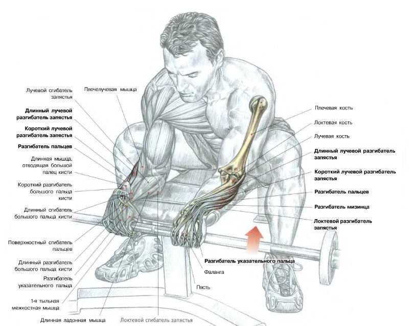 Сила хвата - 88 фото развития мускулатуры для мужчин и женщин