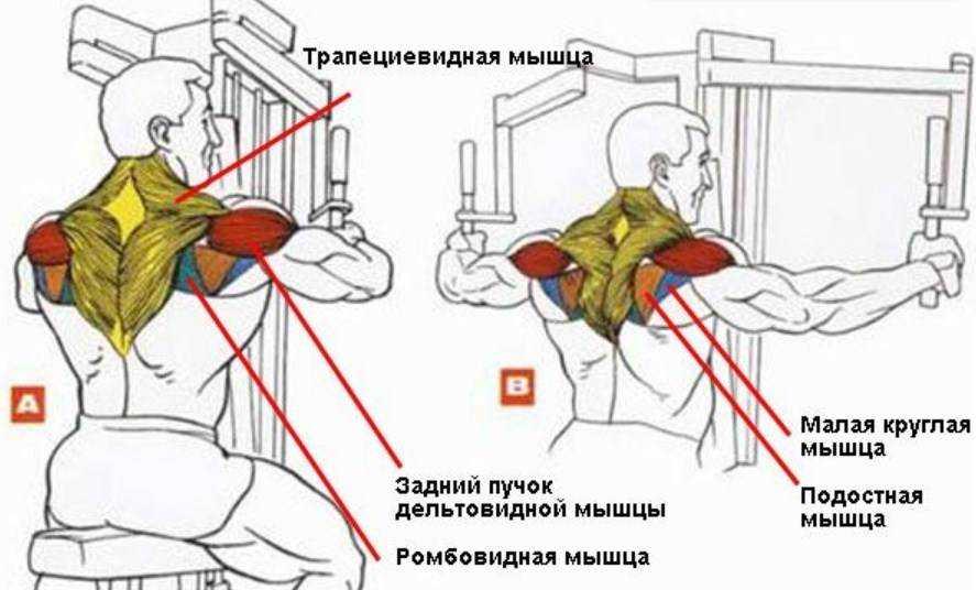 Качаем плечи: комплекс лучших упражнений на дельты