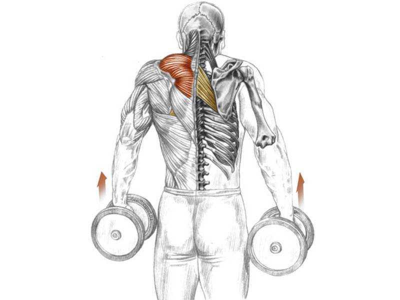 Как накачать трапециевидную мышцу: лучшие упражнения для трапеции