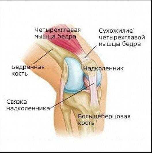 Болят колени при вставании и приседании на корточки: чем лечить боль - твой суставчик
