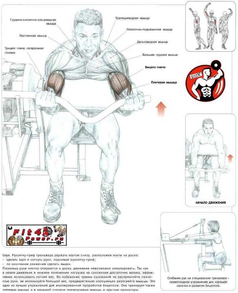 Растяжка рук и плеч, упражнения для растяжки плечевого пояса